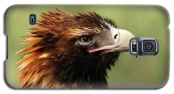 Wedge-tailed Eagle Galaxy S5 Case