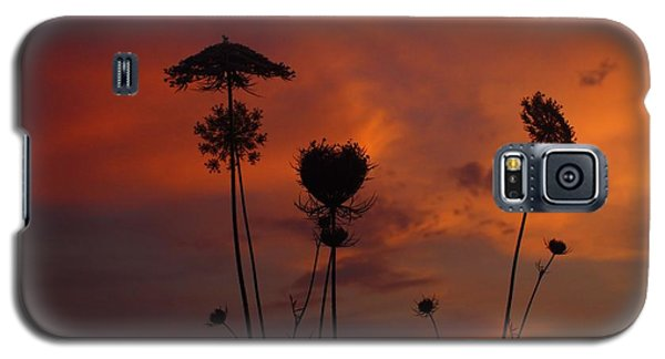 Weeds In The Sunrise Galaxy S5 Case by Kathryn Meyer