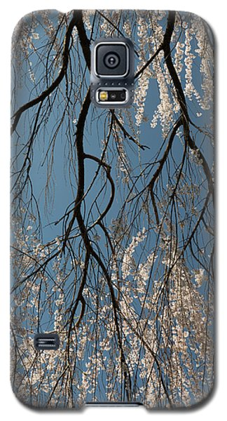 Galaxy S5 Case featuring the photograph Weeping Cherry #2 by Dana Sohr