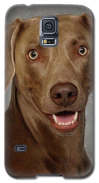 Galaxy S5 Case featuring the photograph Weimaraner by Greg Mimbs