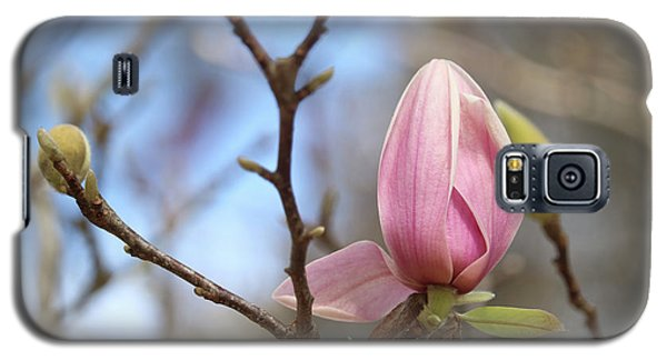 Saucer Magnolia Galaxy S5 Case - Welcome Spring by Carol Groenen