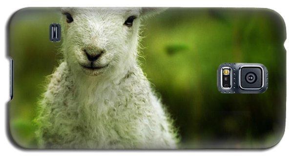 Sheep Galaxy S5 Case - Welsh Lamb by Angel Ciesniarska