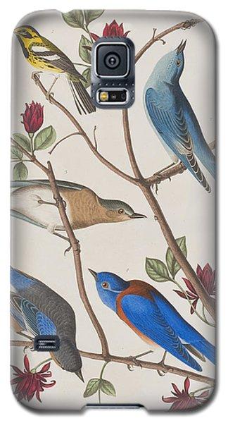 Audubon Galaxy S5 Case - Western Blue-bird by John James Audubon