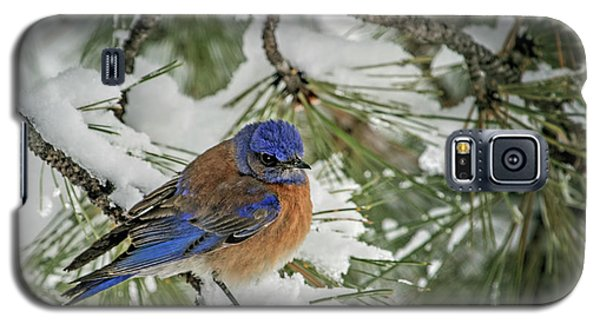 Western Bluebird In A Snowy Pine Galaxy S5 Case