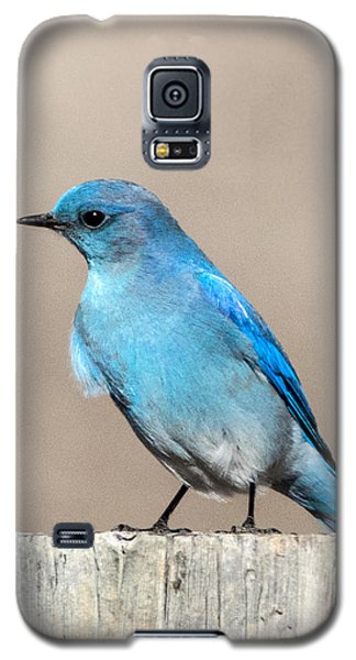 Mountain  Bluebird Galaxy S5 Case