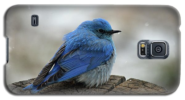 Western Bluebird On Cold Day Galaxy S5 Case