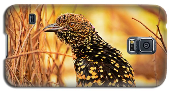 Western Bowerbird Galaxy S5 Case