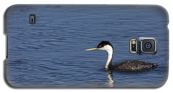 Western Grebe In Late Afternoon Light Galaxy S5 Case