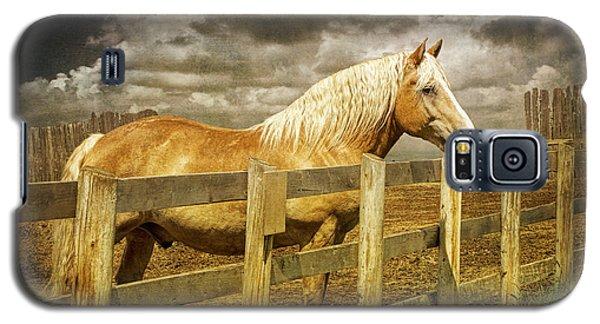 Western Horse In Alberta Canada Galaxy S5 Case