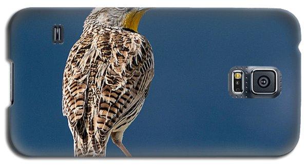 Meadowlark Galaxy S5 Case - Western Meadowlark by Dawn Key