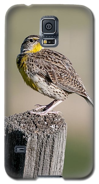 Galaxy S5 Case featuring the photograph Western Meadowlark by Gary Lengyel