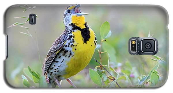 Western Meadowlark Galaxy S5 Case by Jack Bell