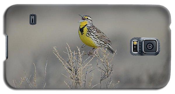 Meadowlark Galaxy S5 Case - Western Meadowlark by Whispering Peaks Photography
