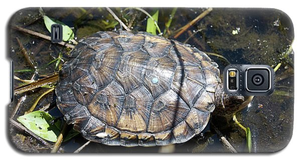 Western Pond Turtle, Actinemys Marmorata Galaxy S5 Case