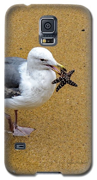 Western Seagull Carrying A Starfish Galaxy S5 Case