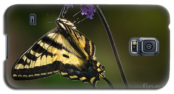 Western Tiger Swallowtail Butterfly On Purble Verbena Galaxy S5 Case