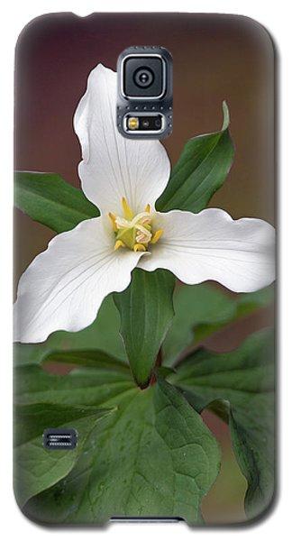 Western Trillium Galaxy S5 Case