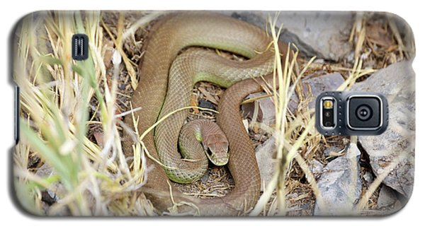 Western Yellow-bellied Racer, Coluber Constrictor Galaxy S5 Case