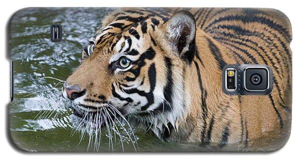 Wet And Wild 1 Galaxy S5 Case