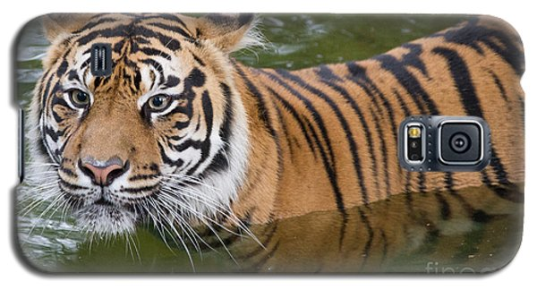 Wet And Wild 2 Galaxy S5 Case