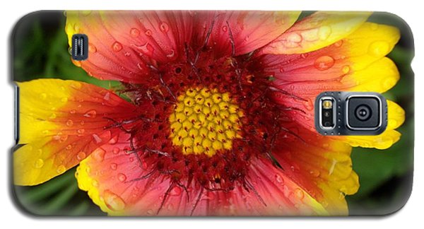 Galaxy S5 Case featuring the photograph Wet Blanket by Elizabeth Sullivan