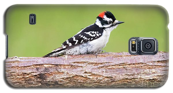 Galaxy S5 Case featuring the photograph Wet Downy Woodpecker  by Ricky L Jones