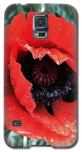 Galaxy S5 Case - Wet Poppy by Orphelia Aristal