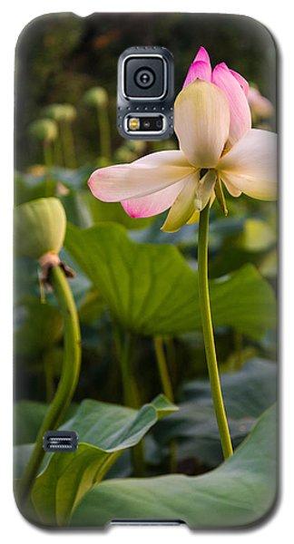 Wetland Flowers Galaxy S5 Case
