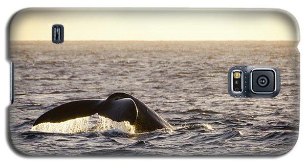 Whale Fluke Galaxy S5 Case