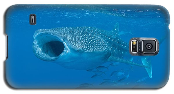 Whale Shark, Ari And Male Atoll Galaxy S5 Case