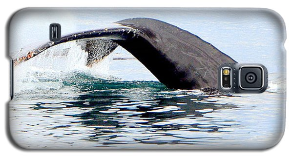 Whale Watch Moss Landing Series 24 Galaxy S5 Case by Antonia Citrino