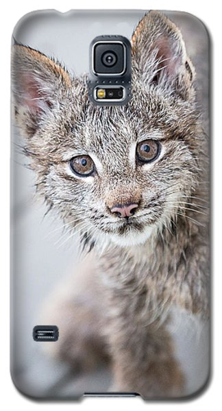 What Are You Galaxy S5 Case