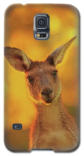 Galaxy S5 Case featuring the photograph What's Up, Yanchep National Park by Dave Catley