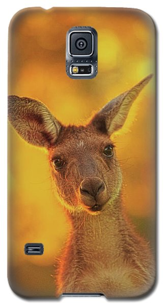 What's Up, Yanchep National Park Galaxy S5 Case by Dave Catley