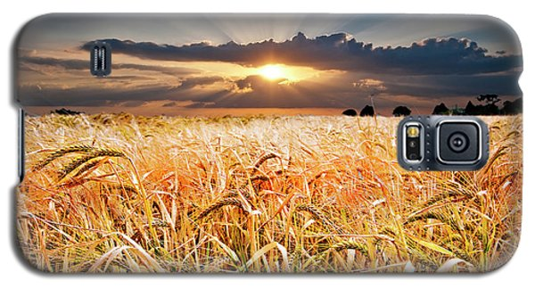Wheat At Sunset Galaxy S5 Case