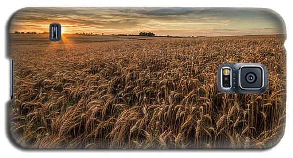 Wheat At Sunset Galaxy S5 Case