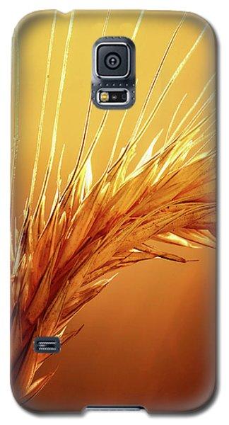 Wheat Close-up Galaxy S5 Case
