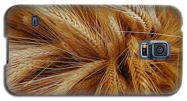 Wheat In The Sunset Galaxy S5 Case