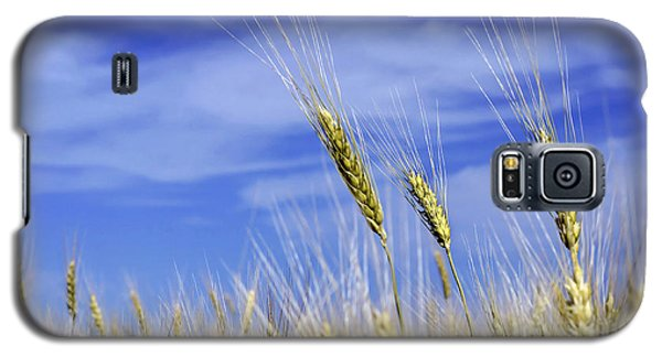 Wheat Trio Galaxy S5 Case by Keith Armstrong