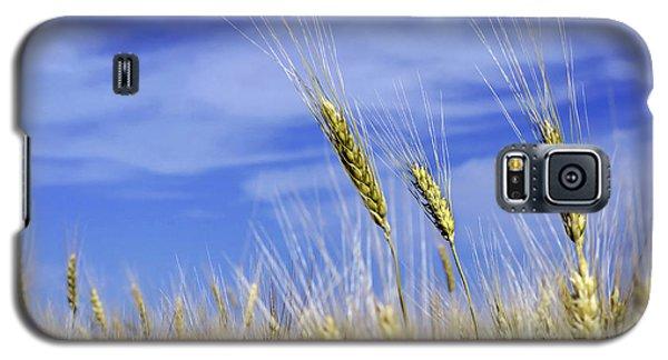 Wheat Trio Galaxy S5 Case
