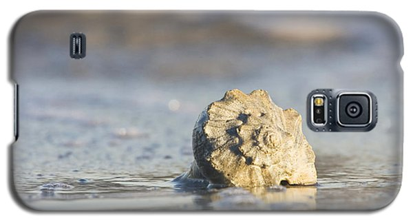 Whelk Shell In Surf Galaxy S5 Case by Bob Decker
