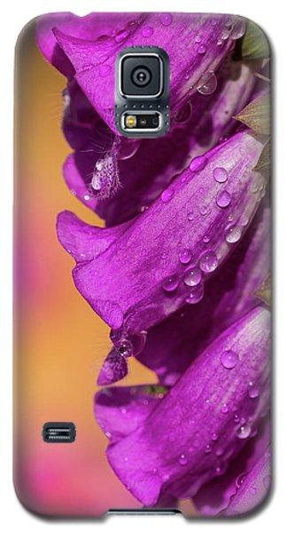 Where Color Grows Galaxy S5 Case