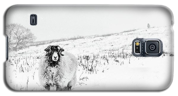 Sheep Galaxy S5 Case - Which Way Is South? by Janet Burdon