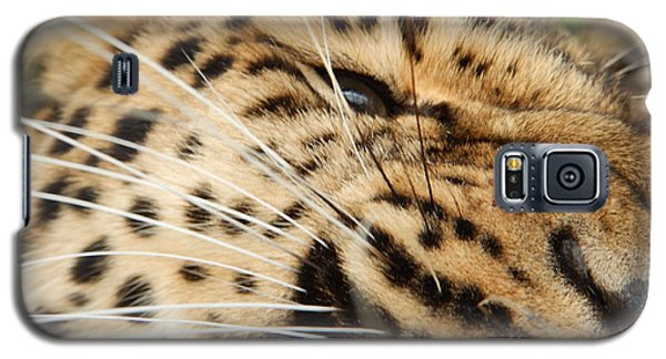 Galaxy S5 Case featuring the photograph Whiskers  by Gary Bridger