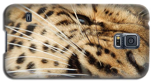 Whiskers  Galaxy S5 Case by Gary Bridger