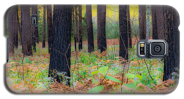 Galaxy S5 Case featuring the photograph Whispering Woods by Mary Amerman