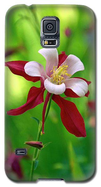 White And Red Columbine  Galaxy S5 Case by James Steele