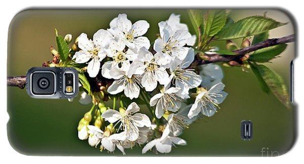 White Apple Blossoms Galaxy S5 Case