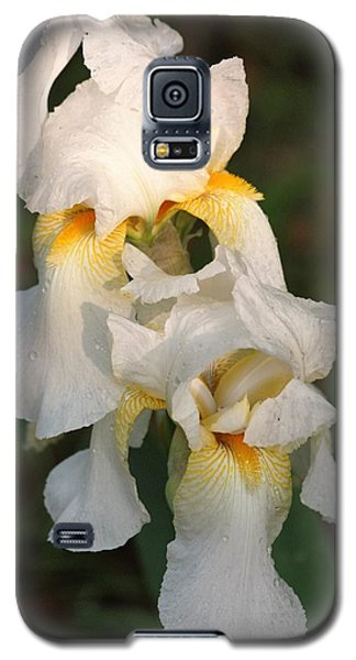 Two White Bearded Iris At Dusk Galaxy S5 Case by Sheila Brown