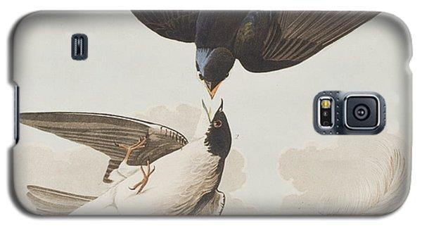 White-bellied Swallow Galaxy S5 Case